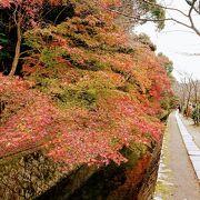 小川沿いの散歩道