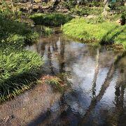 富士山の雪解け水が湧き出ている…公園