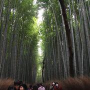 覆いかぶさってくるような竹の群れ