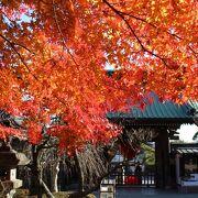 秋の紅葉は見事