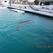 イルカにも触れる