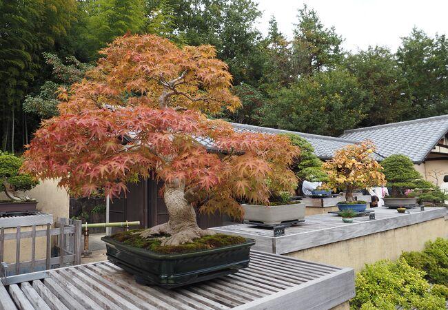 国営昭和記念公園 盆栽苑