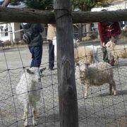 馬牛山羊羊など