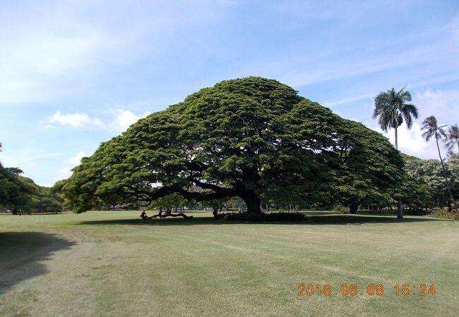 日立の木が沢山ある