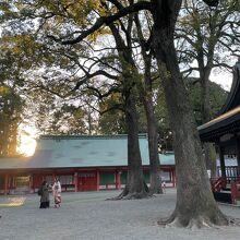 空いている氷川神社