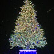 クリスマスツリー点灯式に雪が降りました!