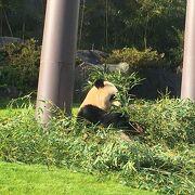 パンダ可愛い♪イルカショーもすごかった!