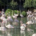 広大な敷地の動物園