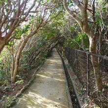 自然遊歩道を歩き灯台を目指す