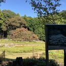 家建の茶屋跡のオオシマザクラ