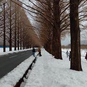 雪の中のメタセコイヤ並木