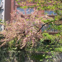 桜の季節の景観