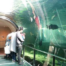 日本最大級のアマゾン水槽&淡水魚の水族館!