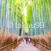 嵐峡付近で紅葉撮影を堪能したあと、嵐山公園 (亀山地区)を抜けて嵯峨野 竹林の道を訪問。