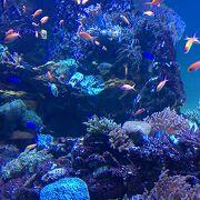 アクセス良い水族館