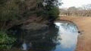 花交の池 (岡山後楽園)