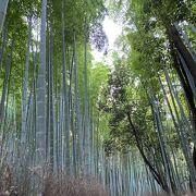 京女の独り言「嵯峨嵐山の竹林」