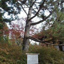 登天の松と杓子の芝