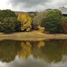 東大寺 大仏池