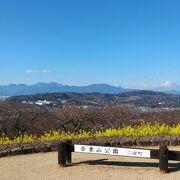 菜の花と富士山の組み合わせが美しい