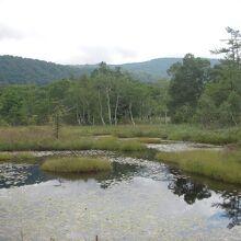 尾瀬ヶ原の池塘