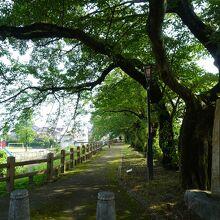 松川磯部堤防遊歩道