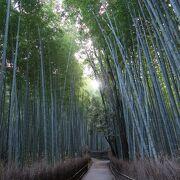 鬱蒼とした竹林の小径