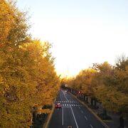 秋はイチョウ並木がきれい
