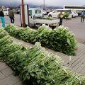 野沢菜が大量に売られていました