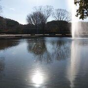 平塚市内にある大きな総合公園