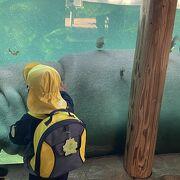 気軽に行ける動物園