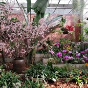 2月の世界を旅する植物園ではルリハナガサ、オオベニゴウカンが見られました。