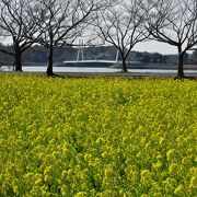 公園内には山茶花が咲いていました。野鳥もいました。しょうぶ苑はいつもと違う光景でした。
