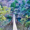 秘境の中の吊り橋