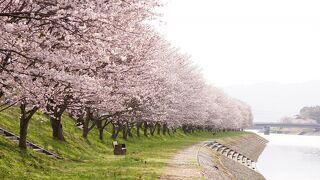 たぶせ桜まつり
