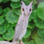 沢山の鳥が自由に飛び回る掛川花鳥園