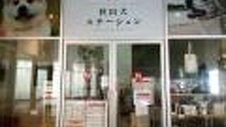 秋田犬ステーション
