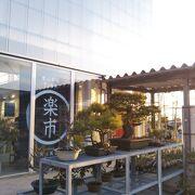 見事な松の盆栽