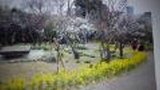 植物園は、東門から