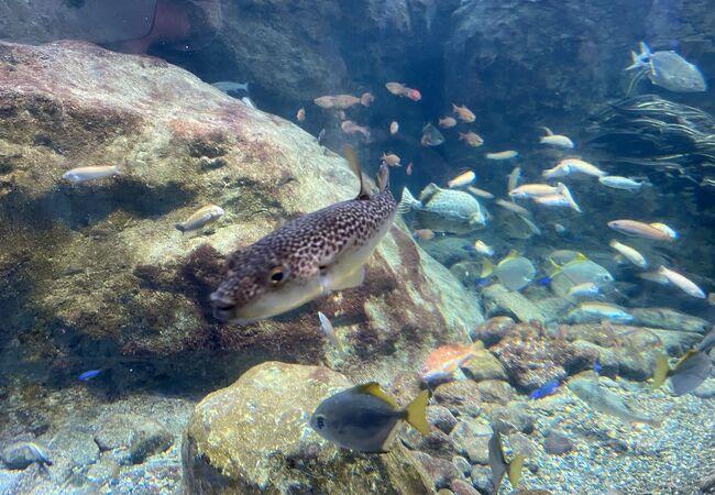 かわいい魚たち