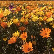 那賀大規模花畑