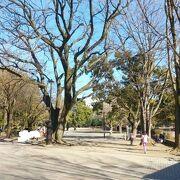 とにかく広い公園
