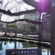 富士山の伏流水が流れる湧水池が美しかった