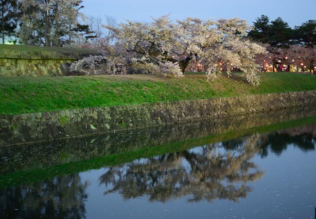 函館の桜の名所の一つ
