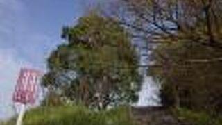 大矢野城跡