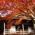 三渓園 春草廬の紅葉
