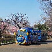 なぎさ公園の河津桜が綺麗でした。