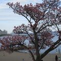 桜もあって