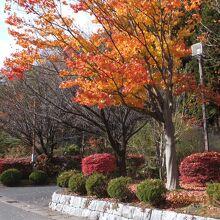 川治湯元駅の紅葉は真っ盛り
