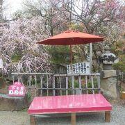 斜面に咲く梅の花に春を感じる。